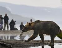Кроноцкому заповеднику нужен грамотный педагог в «Школу бурого медведя»