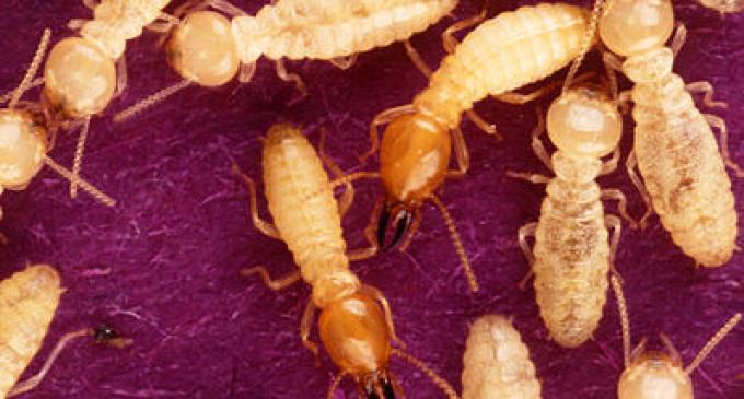 В Китае термиты съели заначку в 3 тысячи долларов