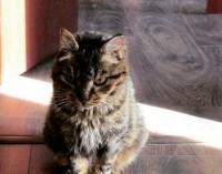 Кошка Матроска из Владивостока снова украла еду