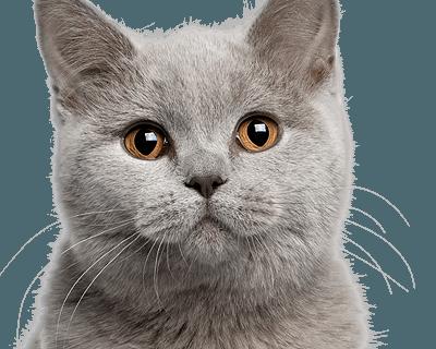 В британский МИД устроился на работу кот