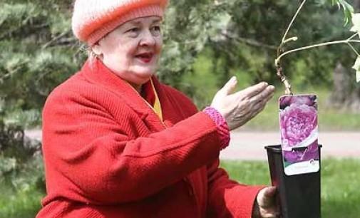 Ботанический сад XVIII века продолжает возрождать в Гродно неравнодушная горожанка