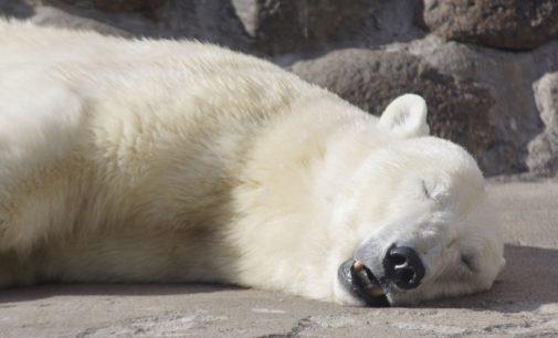 Петербургскому ковчегу зверей — зоопарку, 155 лет…