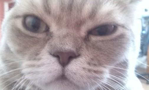 Жители Новосибирска испугались кота-взломщика и вызвали ОМОН