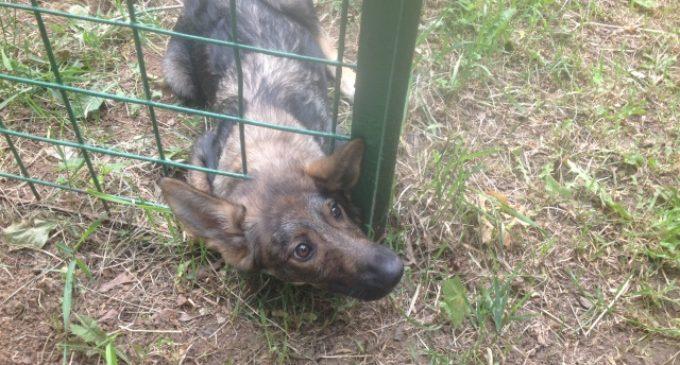 Спасли щенка застрявшего в заборе