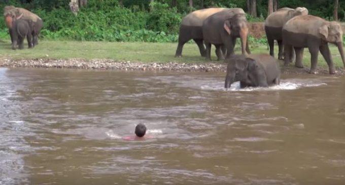 Слоники помнят добро