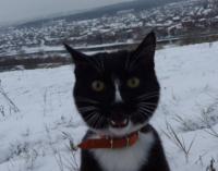 Кот-инстаграмер из Нижнего Тагила спустился в Кунгурские ледяные пещеры
