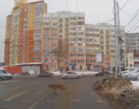 В Тюмени собаки прекрасно знают правила дорожного движения