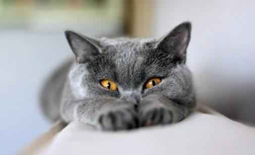 А теперь еще — Республика котят…
