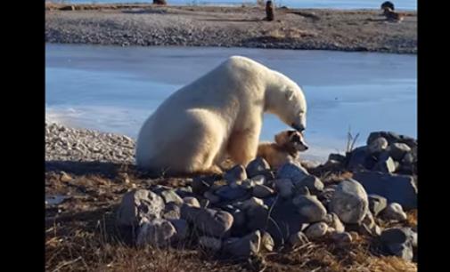 Медведь подружился с собакой