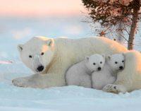 Учёные открыли новую аэрозольную станция в Арктике
