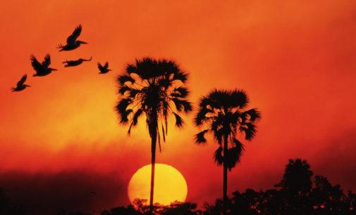 Африканское солнце в декабрьском небе Москвы…
