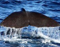 Самый китолюбивый день в году…