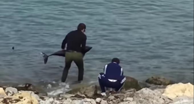 Чудесное спасение дельфина в Новороссийске