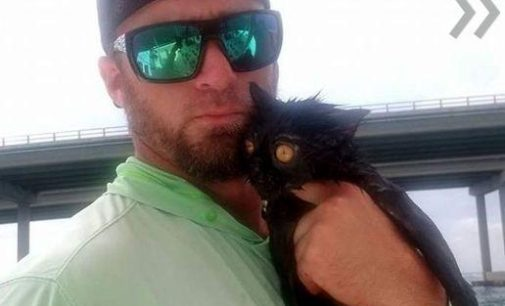 Рыбак случайно спас кошку