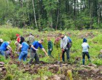 Школьникам предлагают посадить лес вместо подарков ко Дню знаний