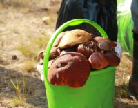 Любители «тихой охоты» поборются за самый большой урожай на фестивале «В Рязани – грибы с глазами»
