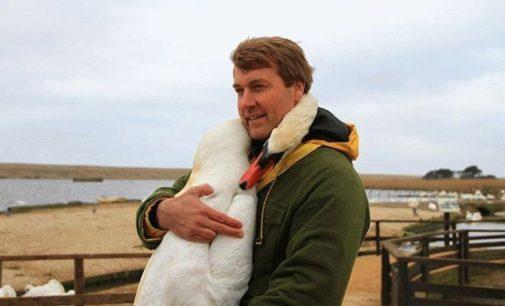 Мужчина спас лебедя и в благодарность птица сделала то, что никто не ожидал увидеть