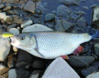 В Новосибирской области пройдет Сибирский рыболовный фестиваль