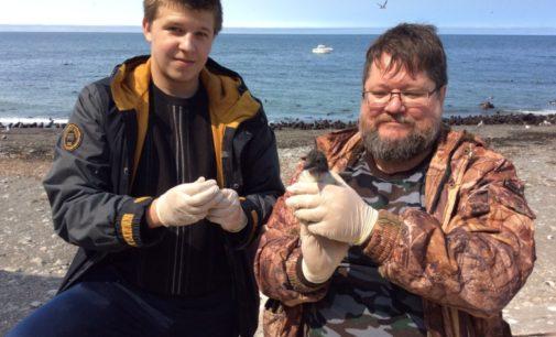 Экспедиция вирусологов ДВФУ и ДВО РАН на малые острова Охотского моря принесла новые данные