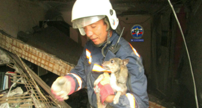 Новосибирские спасатели вытащили собаку из-под завалов после взрыва газа в жилом доме