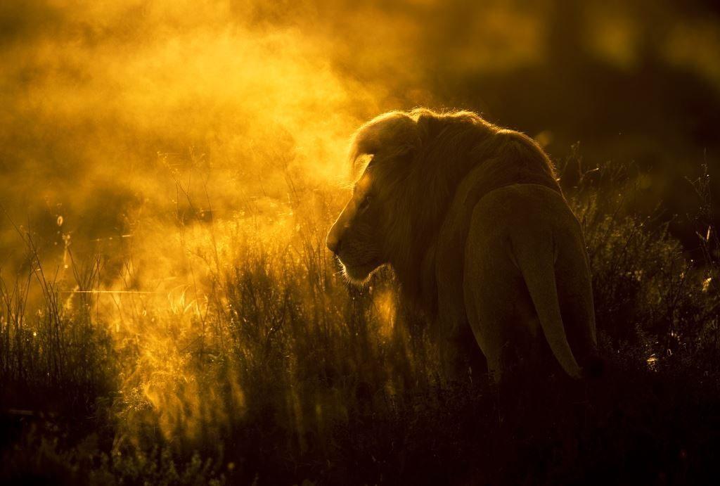Лев в тумане - Викторас Дубинскас_ Литва