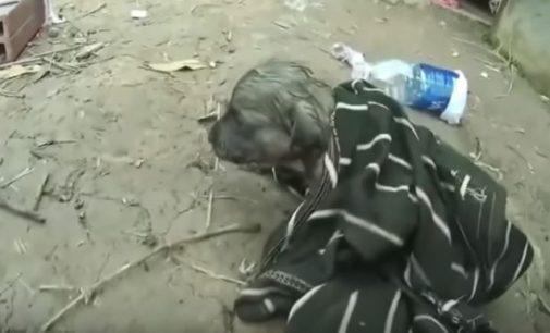 Вьетнамец спас захлебнувшегося щенка, сделав ему вентиляцию лёгких бутылкой