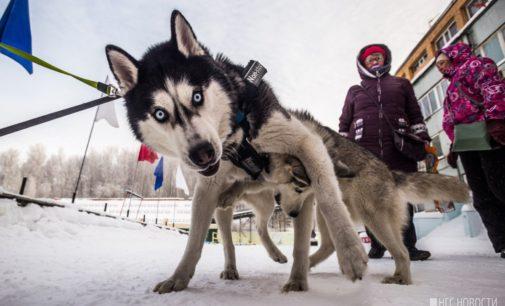 Собакам — собачья соревновательная жизнь!