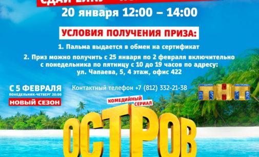 Сдай ёлку – получи пальму! В Петербурге пройдет акция по утилизации ёлок…