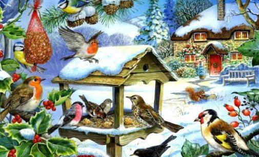 Первый в России парк птиц «Воробьи»