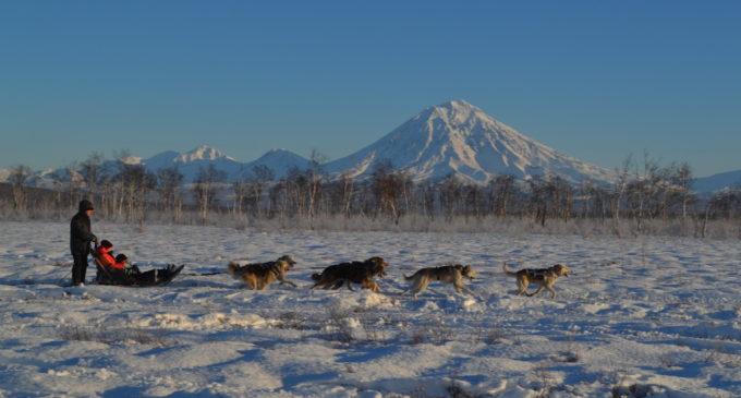 На базе камчатского питомника ездовых собак открылся этнокультурный центр