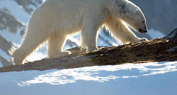 Арктика может растаять к 2050 году