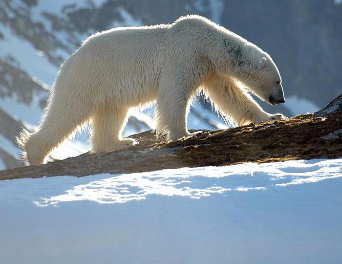 Арктика-освоение-4