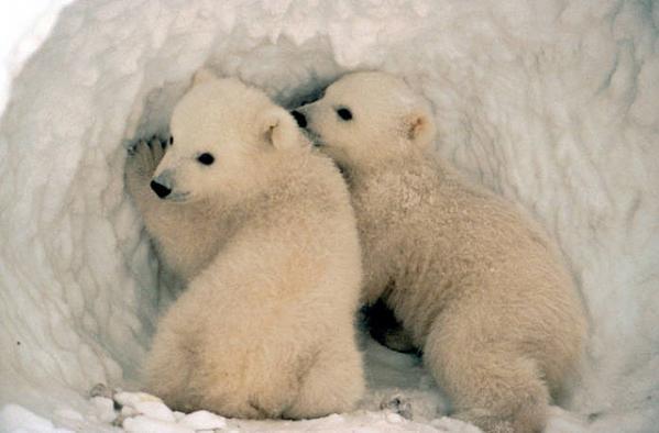 Арктика-освоение-5