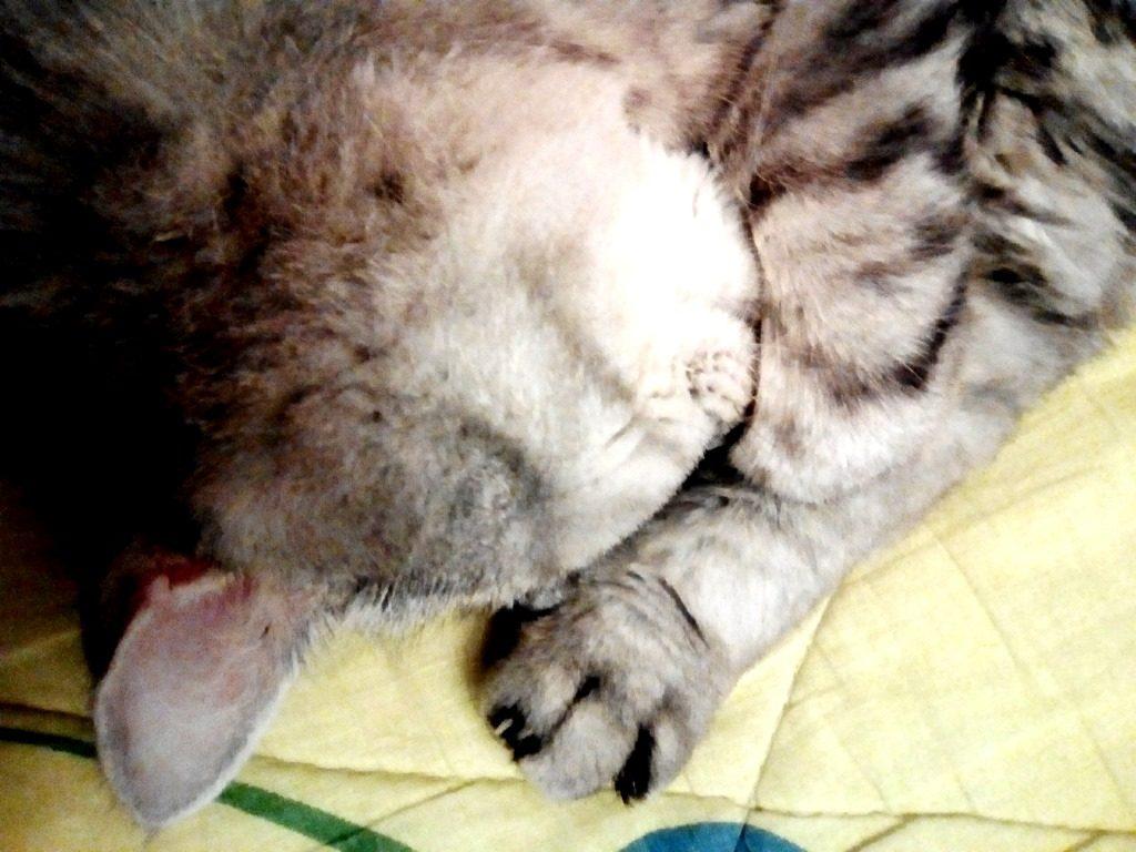 Кошки-акция-4
