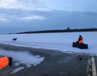 В Сосновом Бору 3 часа спасали дрейфовавшую на льду собаку