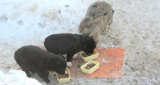 Бездомный кролик воспитал щенков погибшей собаки