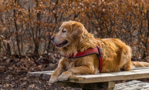 В Праге наградили собак за спасение человеческих жизней