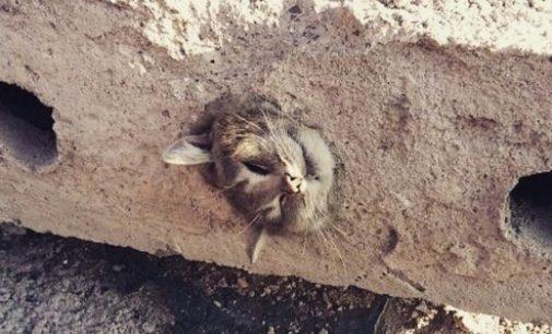Кошку вытащили из бетонной плиты в Караганде