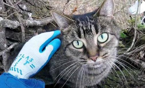 Американский пенсионер спасает котов