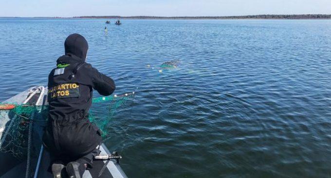 Освобожденный из сетей горбатый кит Лотта поплыл в направлении Швеции