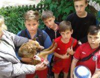 В Кривом Роге дети помогли раненной собаке