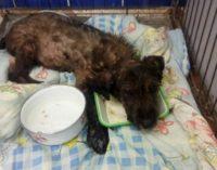 В Бресте спасли щенка, тонувшего в смоле