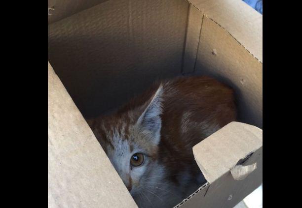 Котенок спасен из 32-метровой шахты вентиляции в Сумгайыте