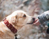 Пёс спас от медведя жительницу Красноярска