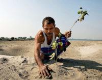 В 16 лет он посадил первое дерево – теперь там лес с редкими животными