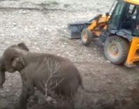 Спасение слоненка с помощью экскаватора