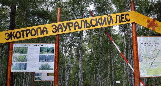 Экскурсионно-экологический маршрут «Зауральский лес» открыт в Кургане