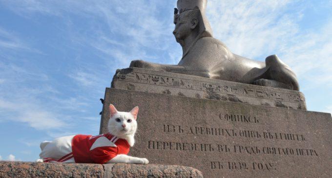 Июльские МУРзыкальные вечера в Республике котов