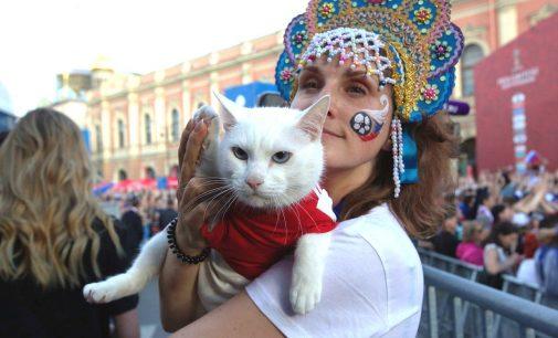 Детские дни в Республике котов: весело и безопасно