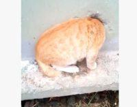 В Екатеринбурге спасли котика, который застрял в стене трансформаторной будки